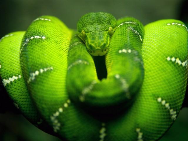 Snake 1024x768
