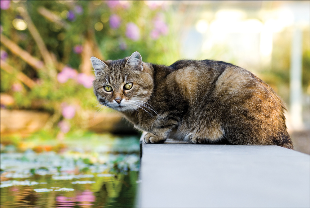 Katze am Teich